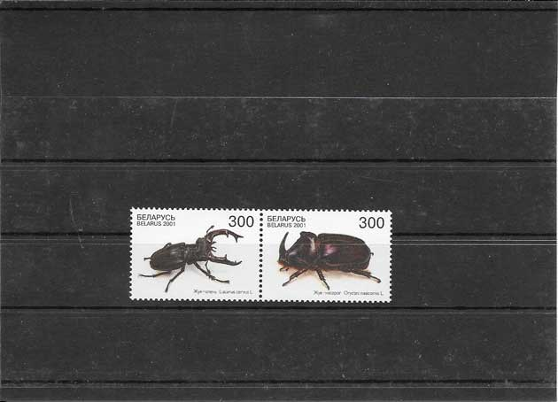 Sellos filatelia fauna coleopteros de Bielorusia