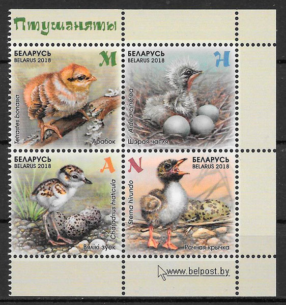 sellos fauna bielorrusia 2018
