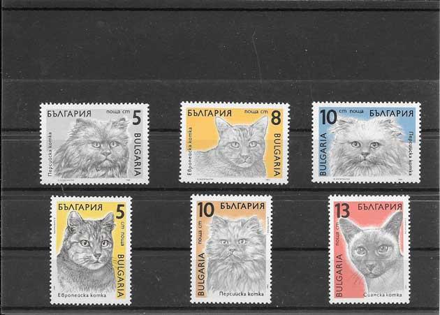 Sellos filatelia serie razas de gatos de Bulgaria