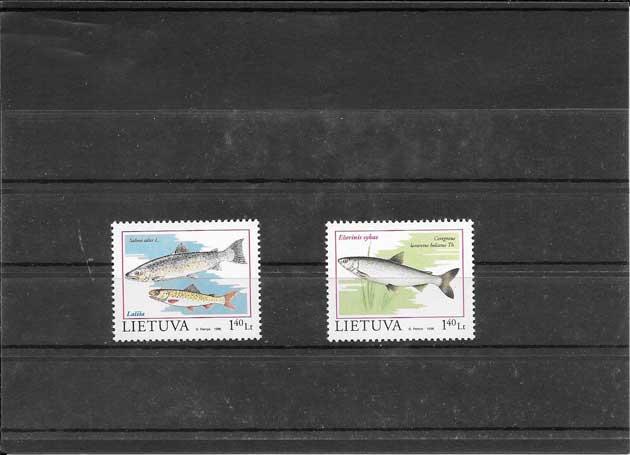 serie de fauna peces