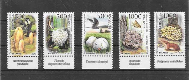 Colección sellos diversidad de setas de bielorrusia