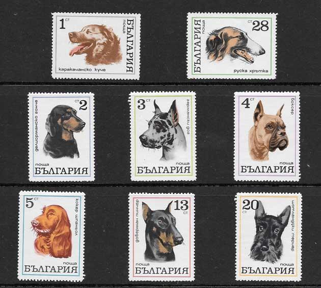 Filatelia sellos diversidad perros Bulgaria-1970-01