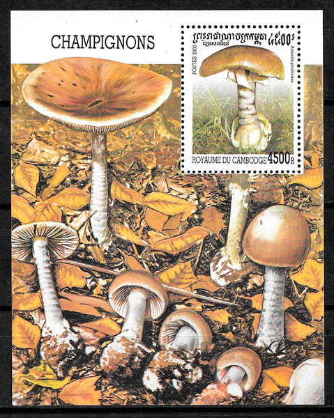 filatelia setas Camboya 2000