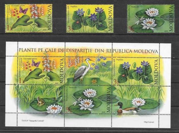 flores de Moldavia 2008