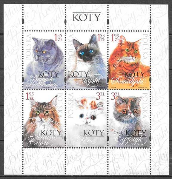 selos gatos y perros Polonia 2010