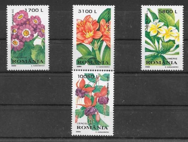 plantas ornamentales del 2000