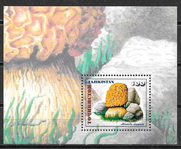 Tajikistan-1999-03-flora