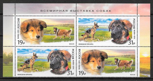 sellos perros Rusia 2016
